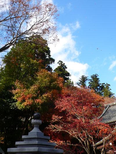 Takaosan081110