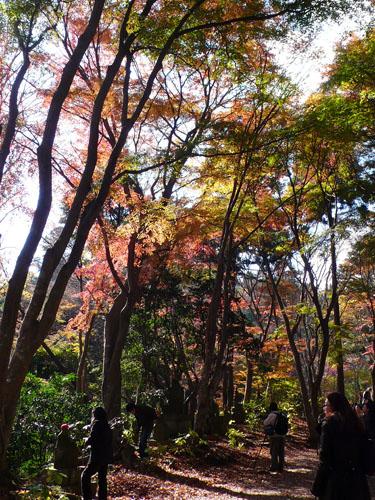 Takaosan08116